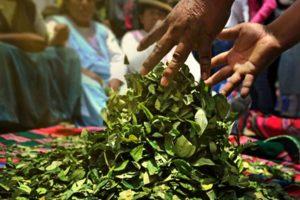 Congresista de Perú Libre Wilson Quispe presenta iniciativa para regular el cultivo, comercialización e industrialización de la hoja de coca